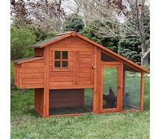 Best Build chicken coop.aspx