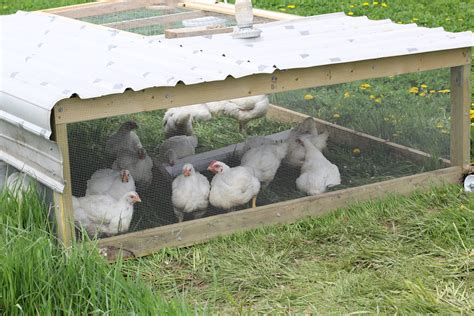 Building Chicken Tractor