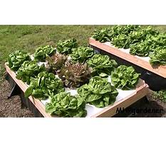 Best Building a wood box for hydroponic float youtube