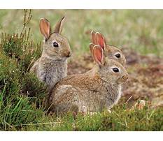 Best Bunny and rabbits difference