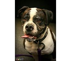 Best Can dog whistles stop barking.aspx