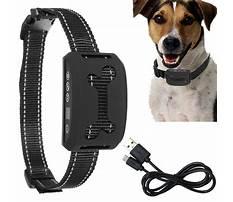 Best Care dog training.aspx