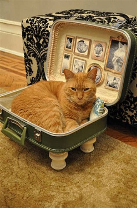 Cat Bed Diy Pinterest Clay