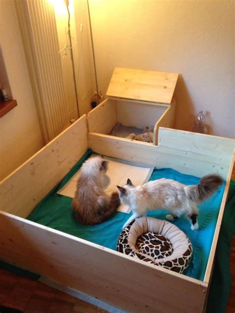Cat Birthing Box Diy