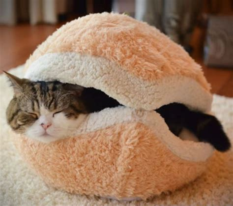 Cat Burger Bed Diy Gone