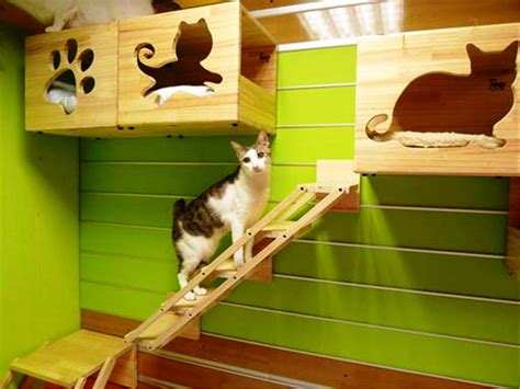 Cat House Plans Indoor