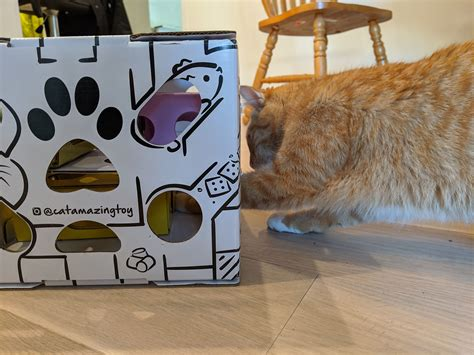 Cat Puzzle Box Diy Gift