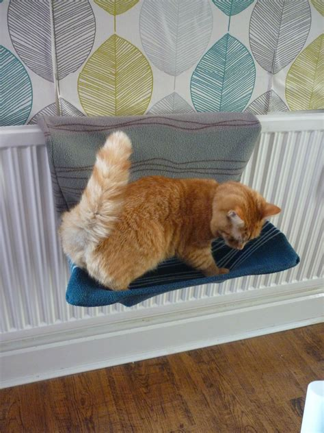 Cat Radiator Bed Diys