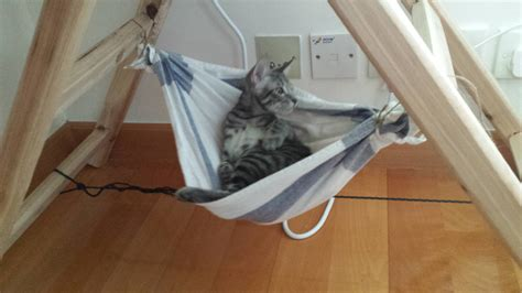 Cat-Hammock-Diy