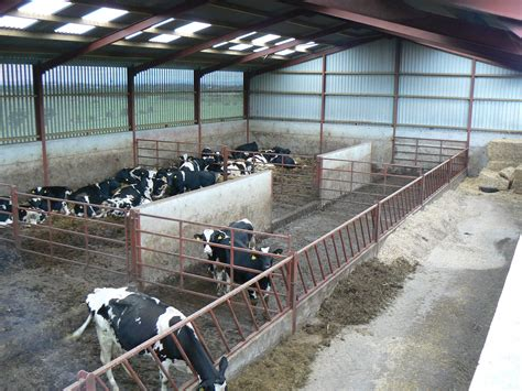 Cattle Shed Design Photo