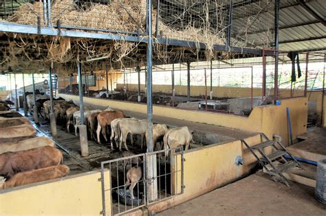 Cattle Shed Designs India