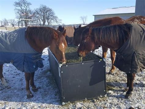 Cattle-Feeding-Pussy-Barn-Plans
