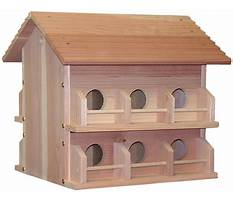 Best Cedar bird house for sale