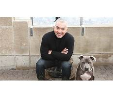 Best Cesar dog trainer