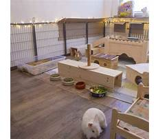 Best Cheap indoor rabbit hutch diy ideas
