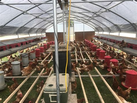 Chicken Coop Building Plans For Egg Layers