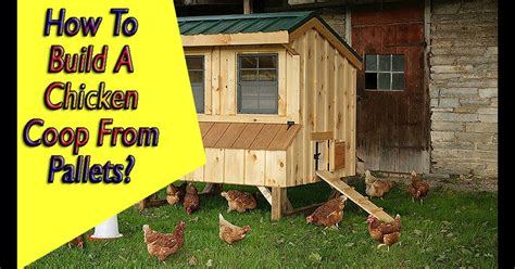 Chicken Coop Plans For 6 8 Chickens Come