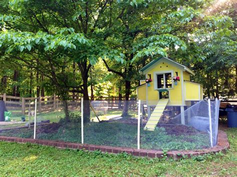 Chicken-Coop-Plans-Around-A-Tree