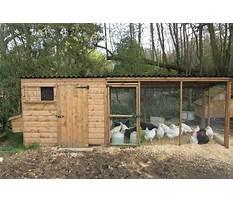 Best Chicken houses designs