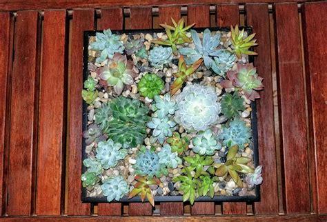 Christmas-Diy-Succulant-Box