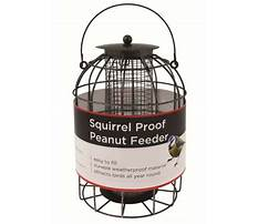 Best Circular peanut bird feeder