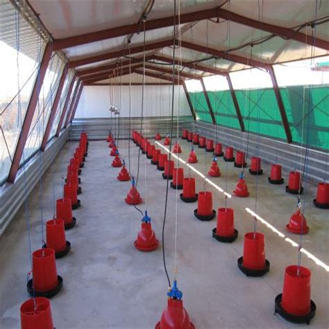 Commercial Chicken Shed Construction