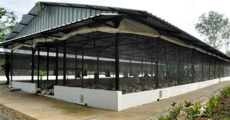 Commercial Poultry House Construction Plans