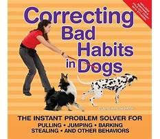 Best Correcting dog barking