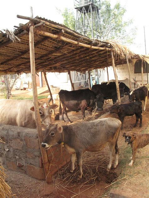 Cow Shed Construction Cost India
