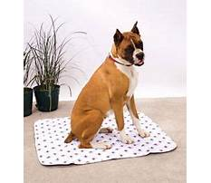 Best Crate toilet training for dogs.aspx