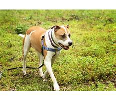 Best Crate trained dogs for adoption.aspx