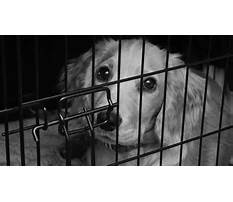 Best Crate training a dog that hates crates.aspx