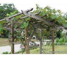 Best Creative grape arbor plans with swing