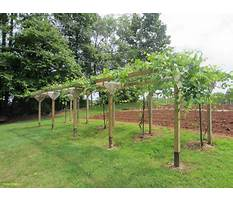 Best Creative grape arbors pergola