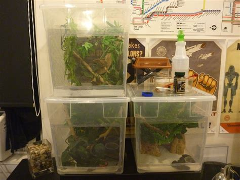 Crested Gecko Enclosure Rack Diy Fire