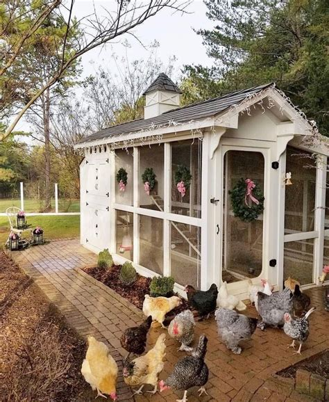 Cute Backyard Chicken Coop Plans