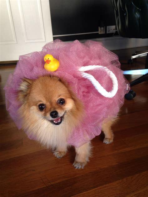Cute-Dog-Costumes-Diy