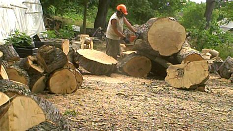 Cutting Large Logs Into Firewood