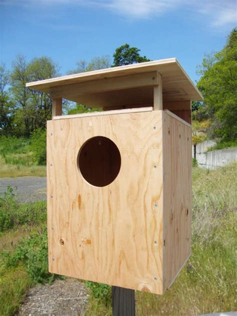 DIY Barn Owl Boxes