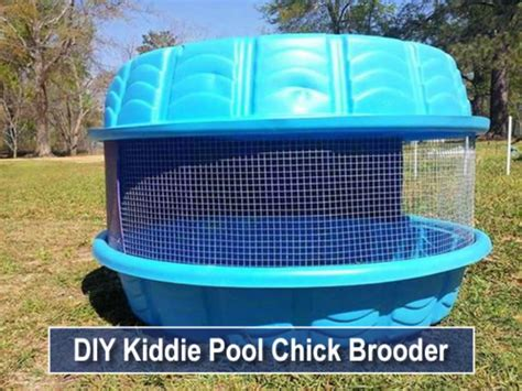 DIY Chicken Brooder Plans For 50 Chickens