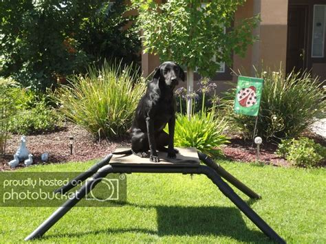 DIY Duck Dog Stand