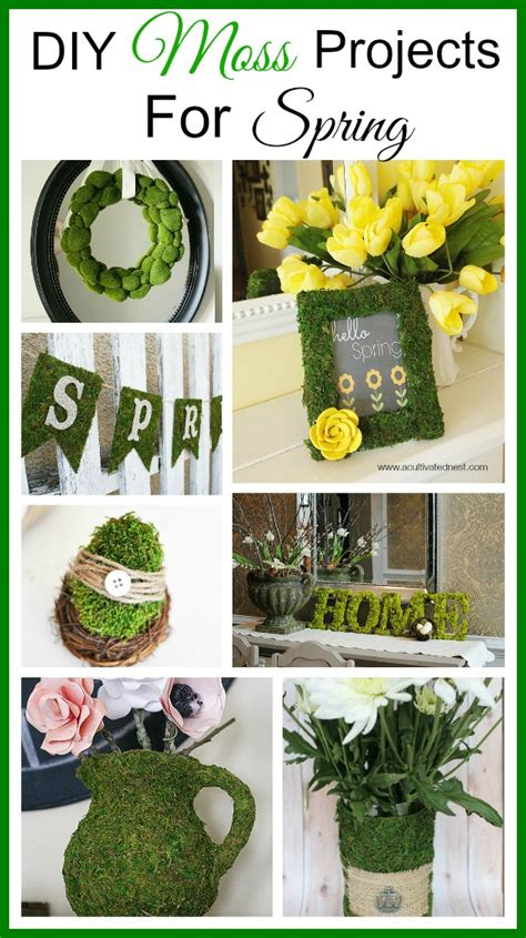 DIY Moss Projects