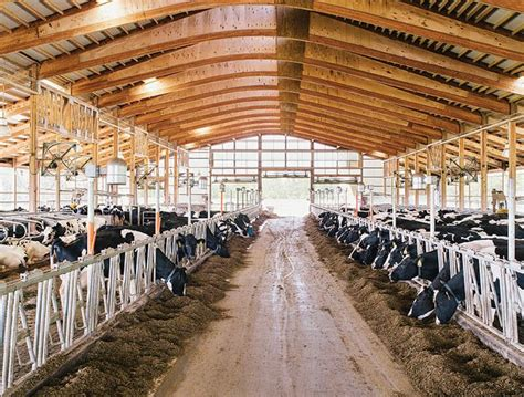 Dairy Cattle Barn Plans