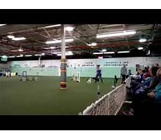 Best Dayton dog training club.aspx