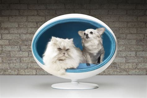Digging Dog Bed Diy Egg