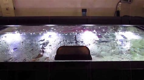 Diy Aquarium Hinged Wood Canopy Youtube Music