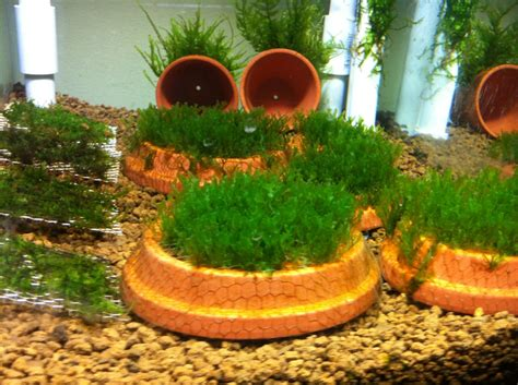 Diy Aquarium Planter Box