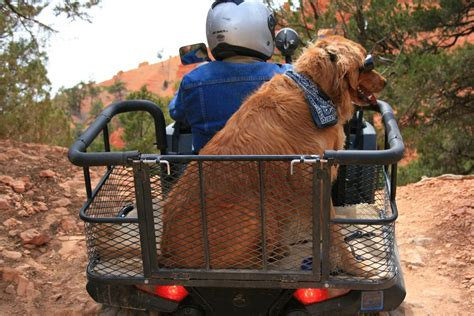 Diy Atv Dog Box