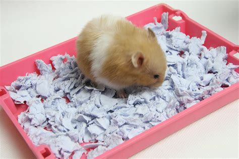 Diy Bedding For Hamster