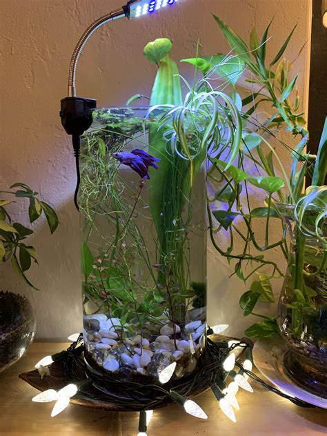 Diy Betta Fish Plant Bowl